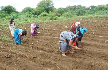 Yashwant Grass for Gothan