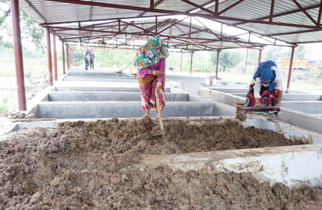 Eisenia fetida earthworms released in vermicompost tanks