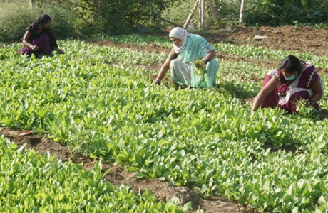 Urban Gothan turns waste land into vegetable farm