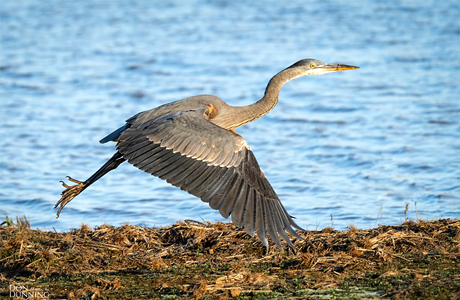 Villagers ensure safety for migratory birds in chhattisgarh