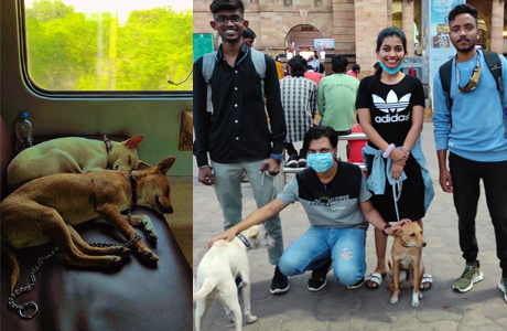Two pups from Durg airlifted to Canada