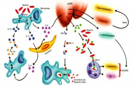 छलिया कोरोना वायरस की सही स्थिति बताता है यह पैथोलॉजी टेस्ट