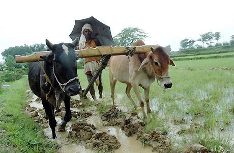 पहली बारिश के बाद किसानों को अकरस जुताई की सलाह